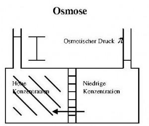 Beschreibung des Osmose Prozesses